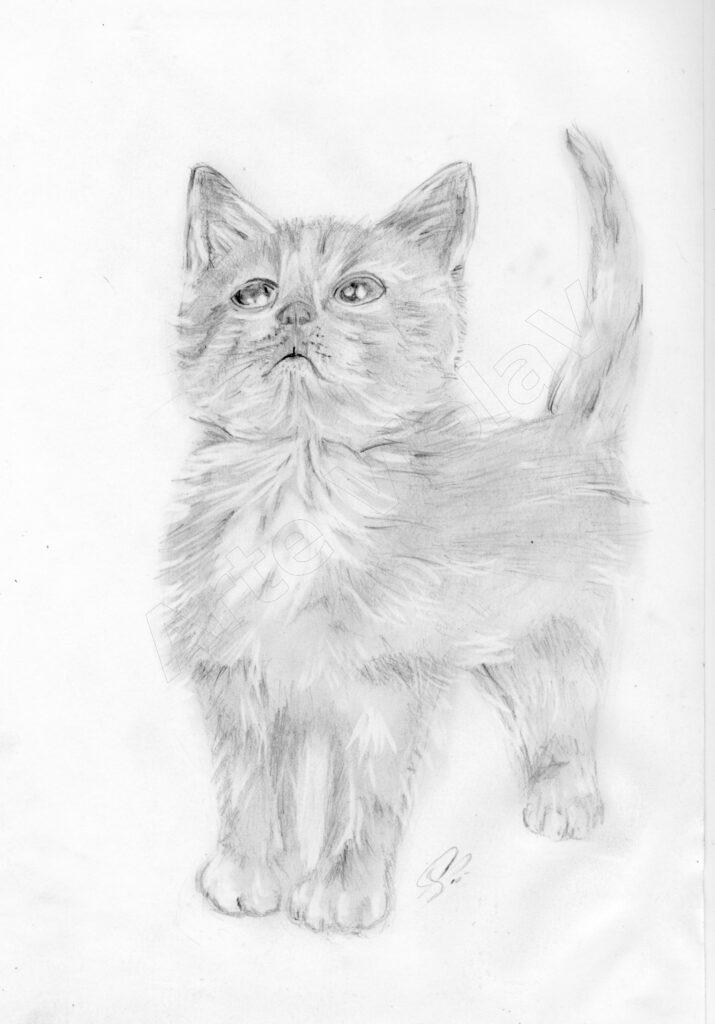le fuse dei gatti © arte violav