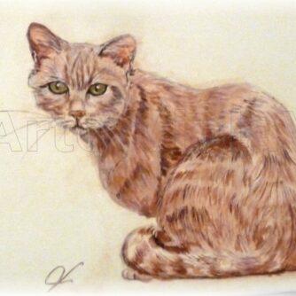 gatto rosso ritratto dipinto di Violetta Viola Arte ViolaV